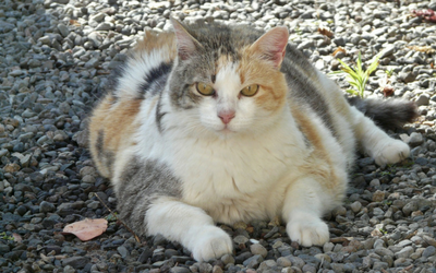 image for National Pet Obesity Awareness Day
