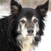 Thumbnail for November is Adopt a Senior Pet Month